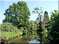 SO8480 : A fine range of trees by the Staffs and Worcs canal by Christine Johnstone