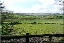 SX7378 : Towards Hedge Barton by Graham Horn