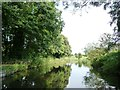 SO8885 : The Stourbridge canal, near Bellsmill by Christine Johnstone