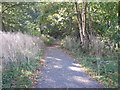 SE2939 : Tynwald Woods - Tynwald Drive by Betty Longbottom