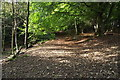 SD6527 : Woodland trail at Witton Park by Philip Platt