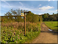 SJ9093 : Reddish Vale Country Park by David Dixon