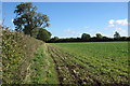 SP8028 : Hedgerow by a ploughed field by Philip Jeffrey
