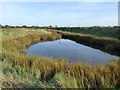 TF5558 : Small pond at Gibraltar Point by Oliver Dixon