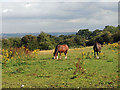 SO9293 : Horses grazing at Sedgley by Row17