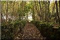 ST7965 : Path on Bathford Hill by Doug Lee