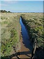 TF5558 : Drainage channel, Gibraltar Point by Oliver Dixon