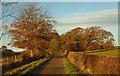 NX7666 : Autumn colour on the Clarebrand triangle : Week 43