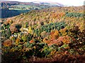 SK2579 : Autumn colour on Longshaw Estate by Graham Hogg