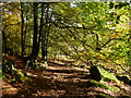 SK2479 : Woodland path on Bole Hill by Graham Hogg