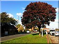 SO8321 : Bronze maple by the A38 by Jonathan Billinger
