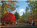 ST8590 : Admiring the Autumn Colours at Westonbirt Arboretum by Robin Drayton