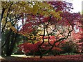 ST8590 : Autumn Colours 2012 at Westonbirt Arboretum (4) by Robin Drayton