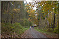 SJ5471 : A trail in Delamere Forest by Ian Greig