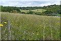 SU9190 : Meadow near Riding Farm by Graham Horn