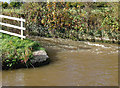 SJ6152 : Canal lock overflow near Ravensmoor, Cheshire by Roger  Kidd