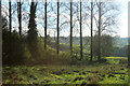 ST6838 : 2012 : Stand of poplars beside the River Alham by Maurice Pullin