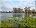 SP6307 : Flooded Fields by Des Blenkinsopp