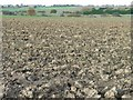 SE4113 : Ploughed field, west of Kinsley [1] by Christine Johnstone