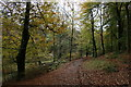 SJ9681 : Path in Knightslow Wood by Graham Hogg
