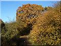 TQ2171 : Autumn on Wimbledon Common : Week 46