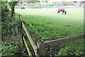 SU3886 : Horses in field beside Court Hill Road by Roger Templeman