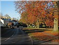 TL4748 : Whittlesford: autumn leaves by John Sutton