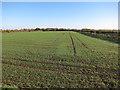 TL3679 : Winter cereal crop by Hugh Venables