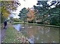 SJ9380 : Macclesfield Canal by Chris Morgan