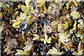 TQ3299 : Autumn Leaves, Whitewebbs Park, Enfield by Christine Matthews