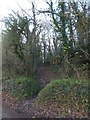 ST1601 : Path into Combe Wood by David Smith