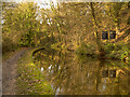 SJ9590 : Peak Forest Canal, River Wood by David Dixon