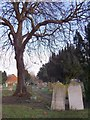 TQ2768 : The churchyard, Mitcham parish church, in winter - with conker tree by Stefan Czapski