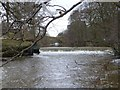 NU1913 : Weir below Denwick Bridge by Russel Wills
