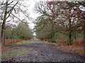 SJ7486 : Avenue at Dunham Massey by Stephen Craven