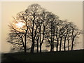 SE0236 : Misty sunlight behind trees, Upper Marsh near Oxenhope by Colin Park