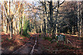 SU6983 : Track by Greyhone Wood by Des Blenkinsopp