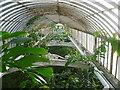TQ1876 : Inside the Palm House at Kew Gardens : Week 1