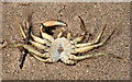 J4080 : Dead crab, Cultra by Albert Bridge