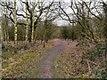 SJ5996 : Footpath in Golborne Park Wood by David Dixon