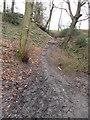 SE1513 : Footpath near Lumb Dike, Molly Carr Wood by Samantha Waddington