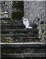 SD3178 : Friendly cat on the steps by Karl and Ali