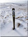 NY8146 : Waymark on Carrshield Moor by Oliver Dixon