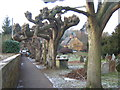 SP2043 : Curiously-shaped trees and thatched house, Ilmington by Barbara Carr