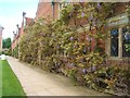 TG1728 : Wisteria-clad wall, Blickling Hall by Barbara Carr