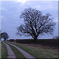 TL9814 : Winter Oak by Roger Jones