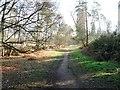 SU8968 : Swinley Forest by Alex McGregor