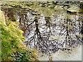 SJ9493 : Pole Bank Pond Reflections by Gerald England