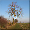 TL9513 : Tree on field boundary, Abbotts Hall Farm by Roger Jones
