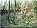 SE5200 : Grey Stones, Pot Ridings Wood, Sprotbrough Gorge by Christine Johnstone